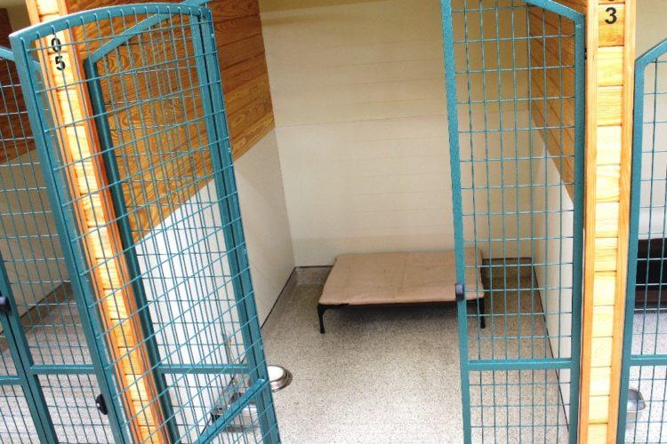 Ambassador Dog Boarding Suite