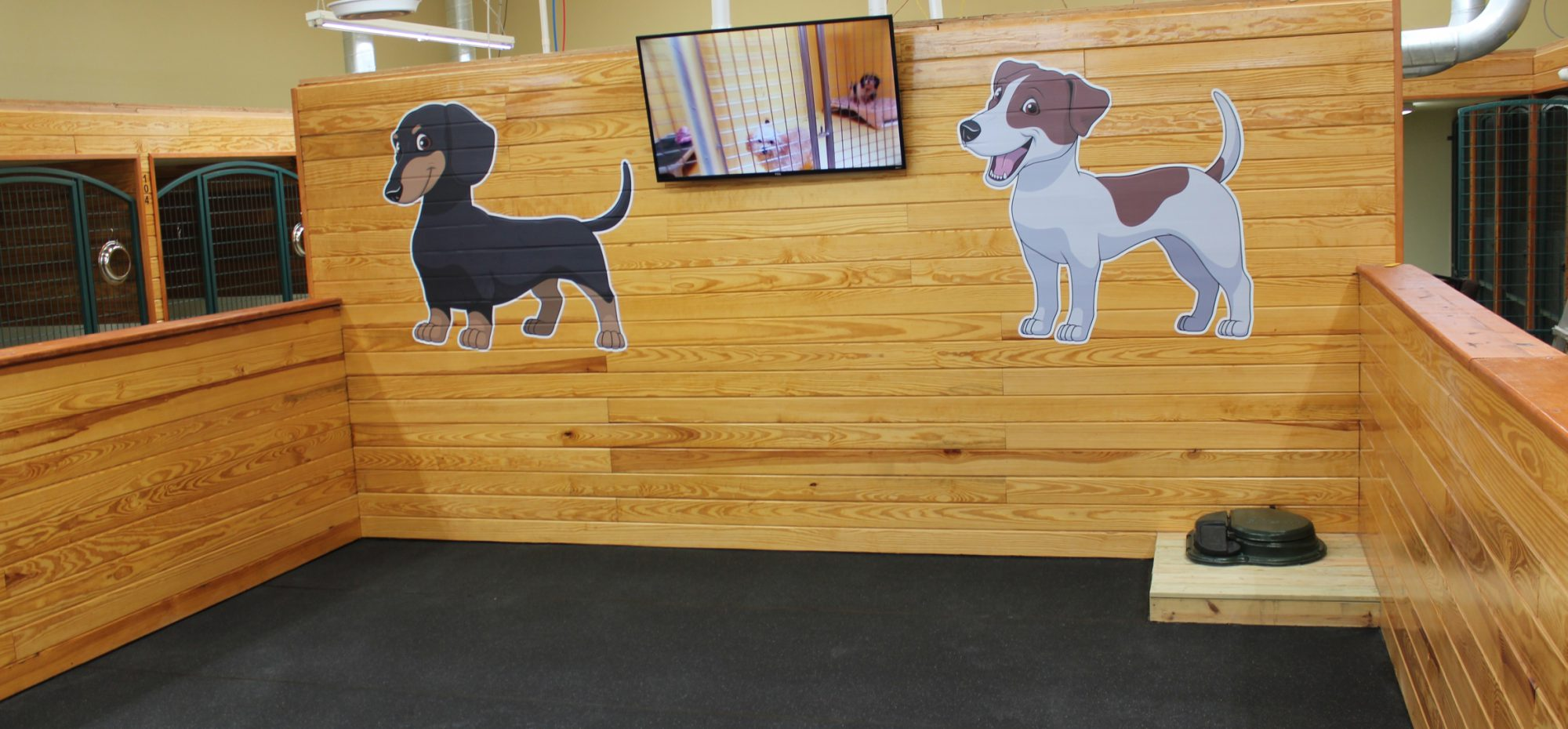 Indoor Dog Play Room