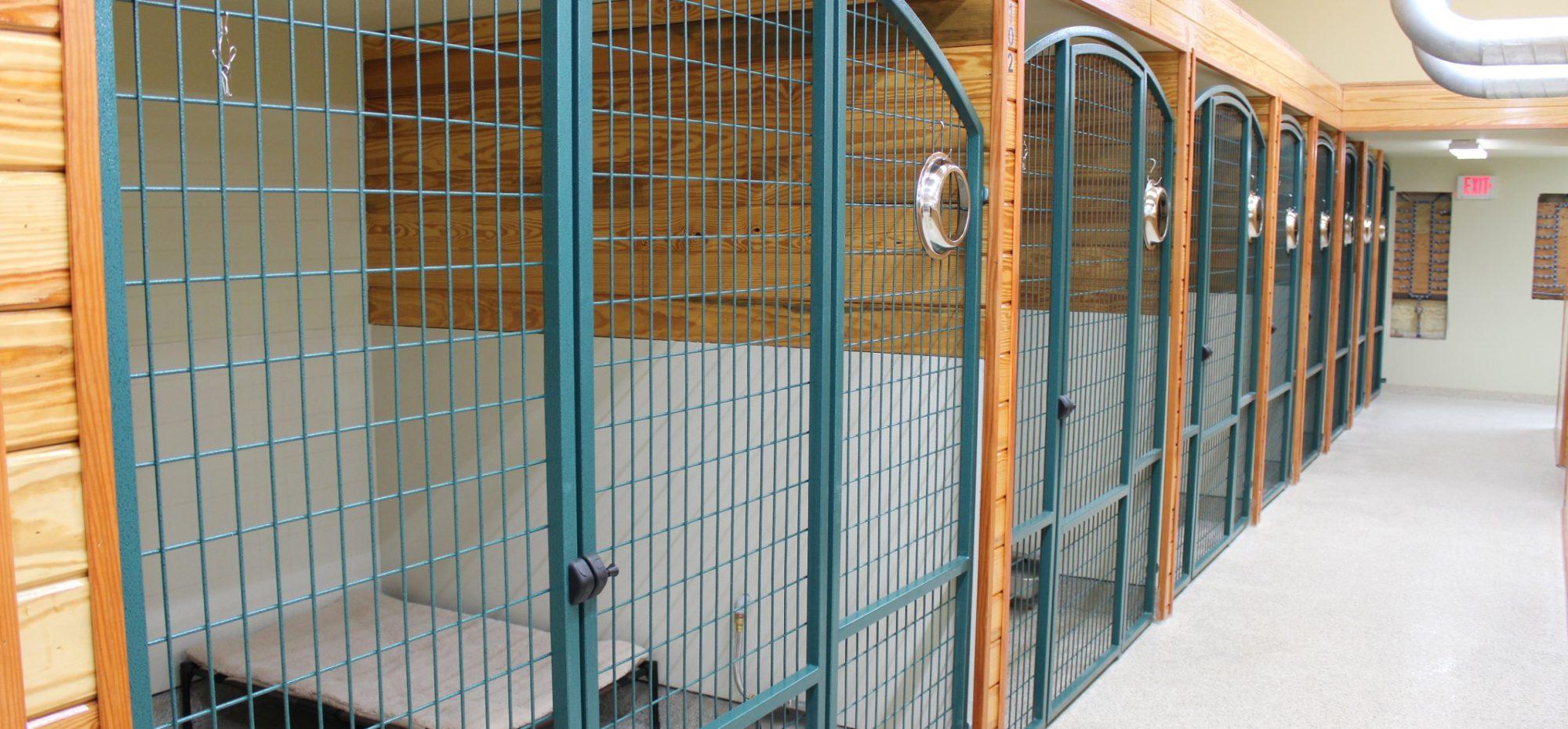 Dog Boarding Suites