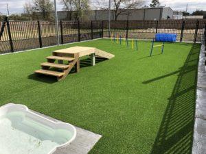 doggie daycare yard spring tx